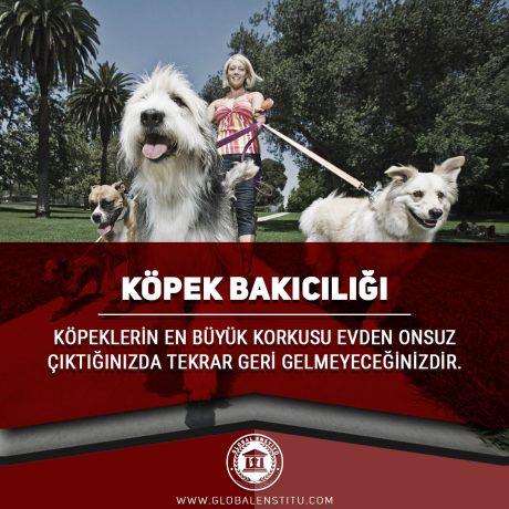 Köpek Bakıcılığı