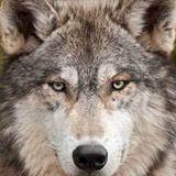 Tuna Günver kullanıcısının profil fotoğrafı