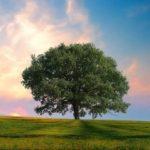 Doğa ve Çevre grup logosu